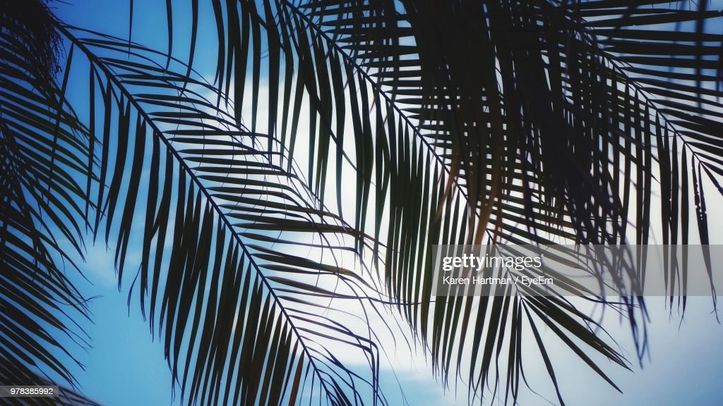 Low Angle View Of Palm Leaves : Stock Photo