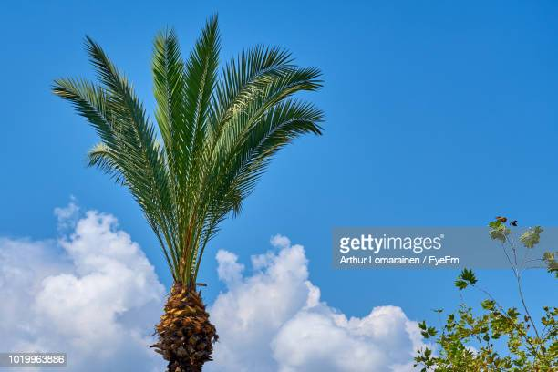 low angle view of palm tree against blue sky - arthur foto e immagini stock