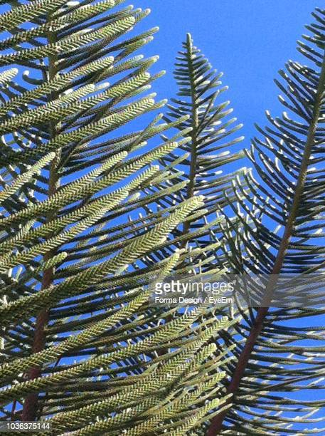 low angle view of palm tree against blue sky - forma stock pictures, royalty-free photos & images