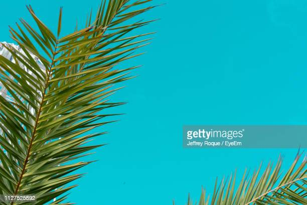 low angle view of palm tree against blue sky - jeffrey roque stock photos and pictures