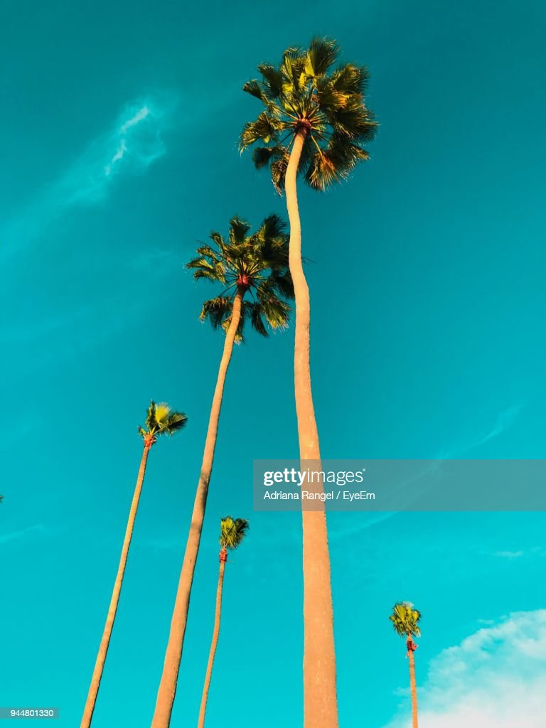 Low Angle View Of Palm Tree Against Blue Sky : Stock Photo