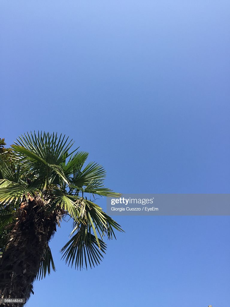 Low Angle View Of Palm Tree Against Clear Blue Sky : Stock Photo