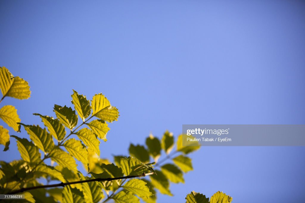 Low Angle View Of Palm Tree Against Clear Blue Sky : Stockfoto