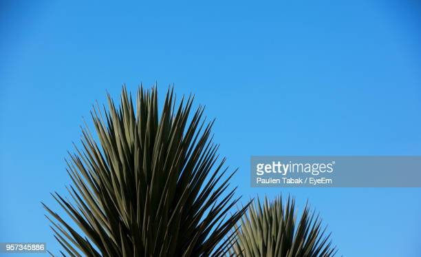 low angle view of palm tree against clear blue sky - paulien tabak stock pictures, royalty-free photos & images