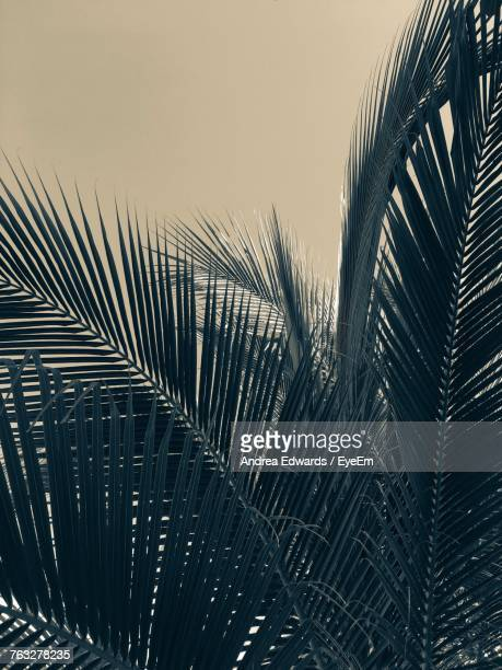 Low Angle View Of Palm Tree Against Clear Sky During Sunset