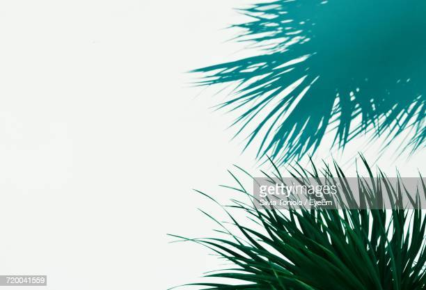 Low Angle View Of Palm Tree Against Clear Sky