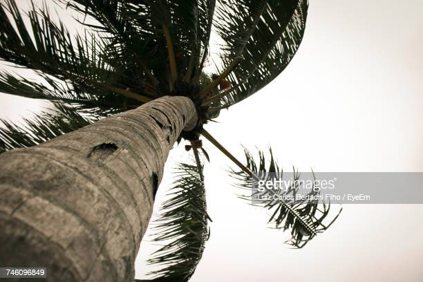 low angle view of palm tree against clear sky - filho stock pictures, royalty-free photos & images