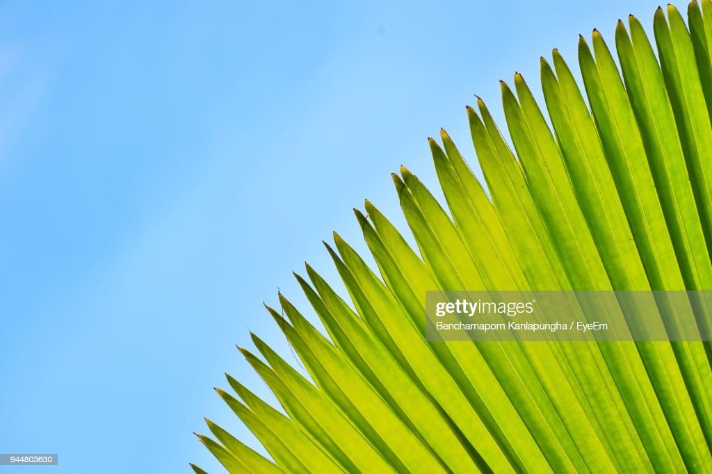 Low Angle View Of Palm Tree Against Clear Sky : Stock Photo