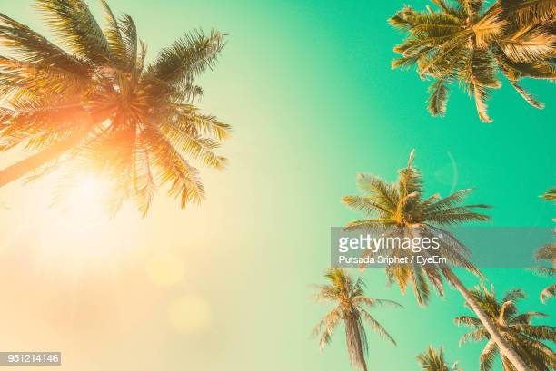 low angle view of palm tree against clear sky - palm tree stock pictures, royalty-free photos & images