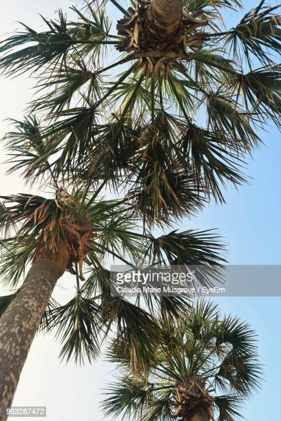 low angle view of palm tree against clear sky - claudia marie stock-fotos und bilder
