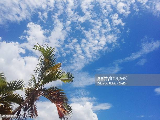 low angle view of palm tree against cloudy sky - san salvador stock pictures, royalty-free photos & images