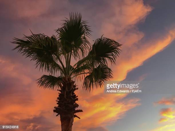 Low Angle View Of Palm Tree Against Dramatic Sky