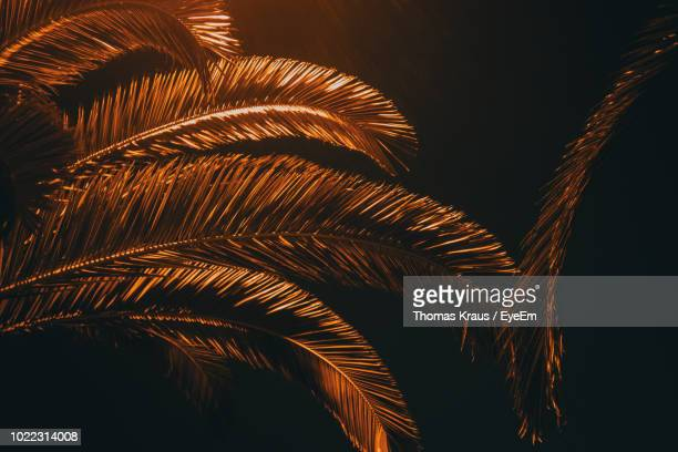 Low Angle View Of Palm Tree Against Sky At Night