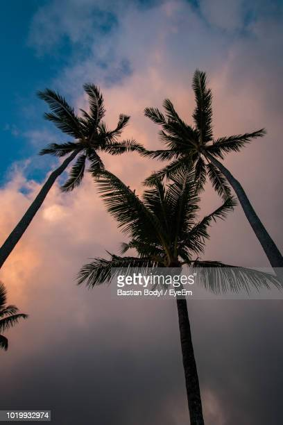Low Angle View Of Palm Tree Against Sky At Sunset