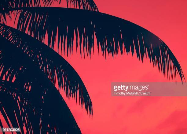 low angle view of palm tree against sky during sunset - palm beach county stockfoto's en -beelden