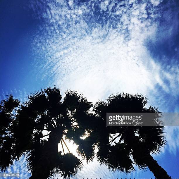 Low Angle View Of Palm Tree Against Sky On Sunny Day