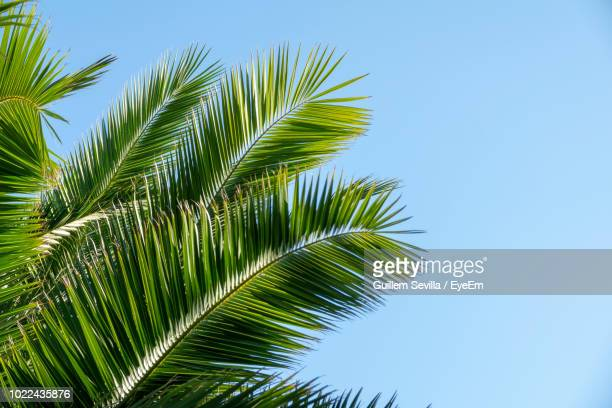low angle view of palm tree against sky - viewpoint stock pictures, royalty-free photos & images