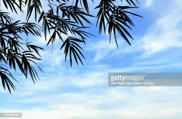 low angle view of palm tree against sky - palm branch stock pictures, royalty-free photos & images