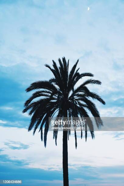 low angle view of palm tree against sky - jelena ivkovic stock pictures, royalty-free photos & images