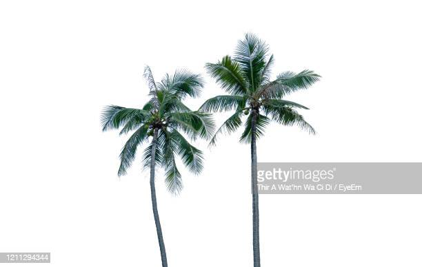 low angle view of palm tree against sky - palm tree stock pictures, royalty-free photos & images
