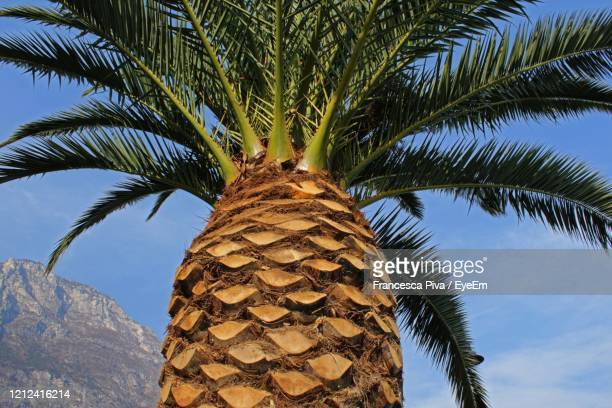 low angle view of palm tree against sky - date palm tree stock pictures, royalty-free photos & images