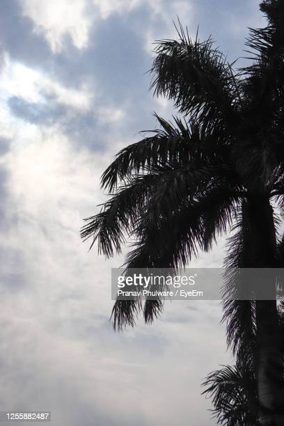 low angle view of palm tree against sky - chandigarh stock pictures, royalty-free photos & images