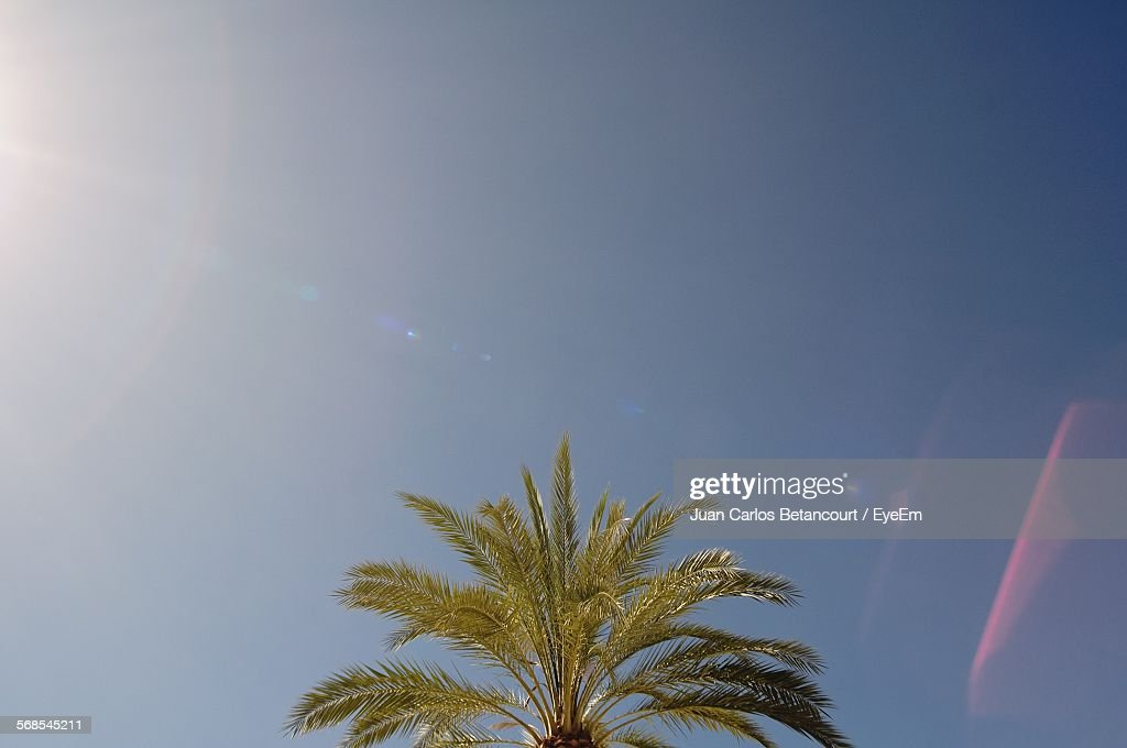 Low Angle View Of Palm Tree Against Sky : Stock Photo