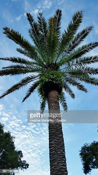 low angle view of palm tree against sky - palm harbor stock-fotos und bilder