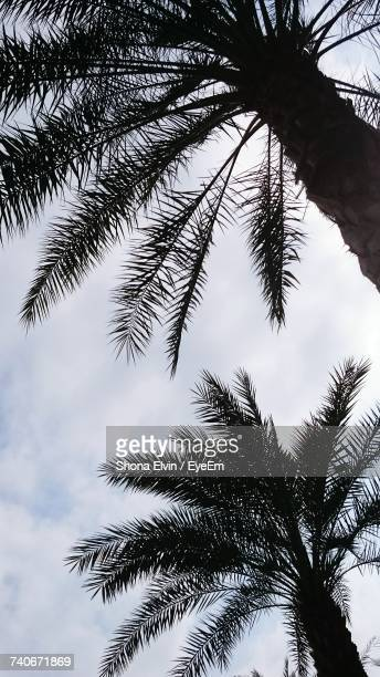 Low Angle View Of Palm Tree Against Sky