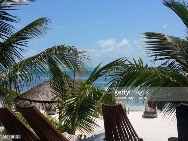 low angle view of palm tree against sky - mujeres fotos stock-fotos und bilder