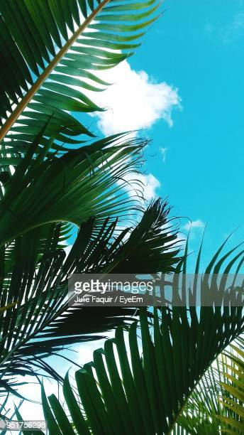 low angle view of palm tree against sky - faquir stock photos and pictures