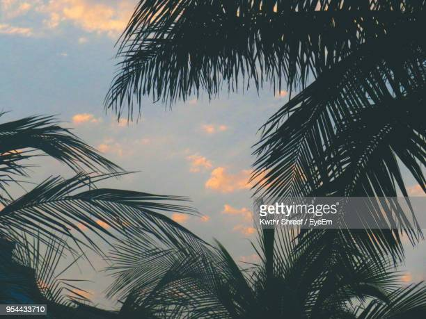 low angle view of palm tree against sky - jiddah stock pictures, royalty-free photos & images