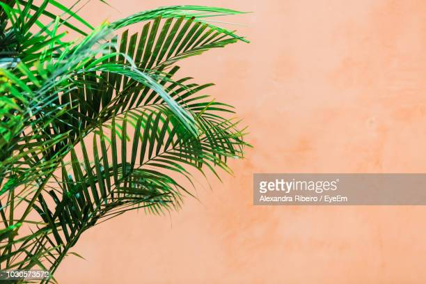 low angle view of palm tree against wall - palm branch stock pictures, royalty-free photos & images