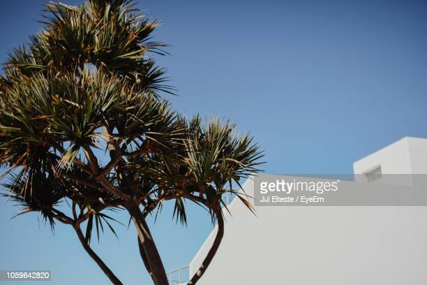 Low Angle View Of Palm Tree And Building Against Clear Sky