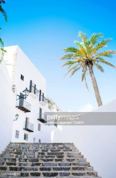 low angle view of palm tree and building against sky - insel ibiza stock-fotos und bilder