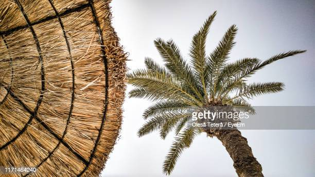 low angle view of palm tree and thatched roof against clear sky - date palm tree stock pictures, royalty-free photos & images