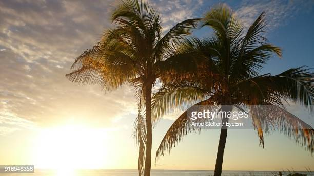 Low Angle View Of Palm Tree At Beach During Sunset
