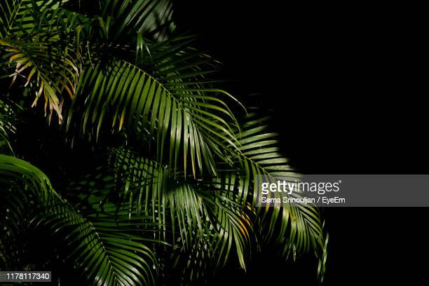 low angle view of palm tree at night - branch plant part stock pictures, royalty-free photos & images