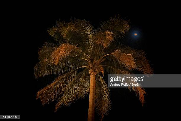 low angle view of palm tree at night - andres ruffo stock-fotos und bilder