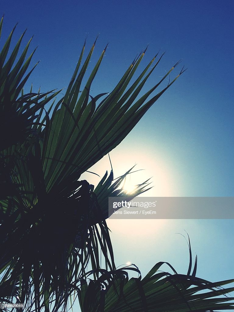 Low Angle View Of Palm Tree Growing Against Sky : Stock Photo