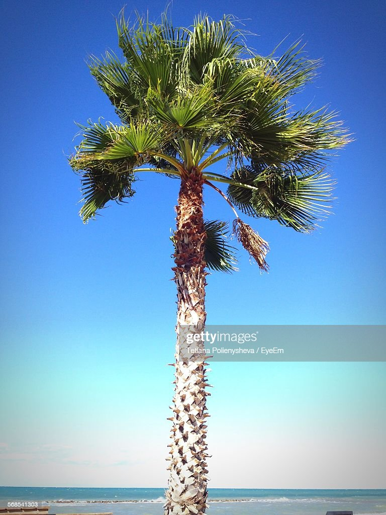 Low Angle View Of Palm Tree On Beach Against Clear Sky : Stock Photo