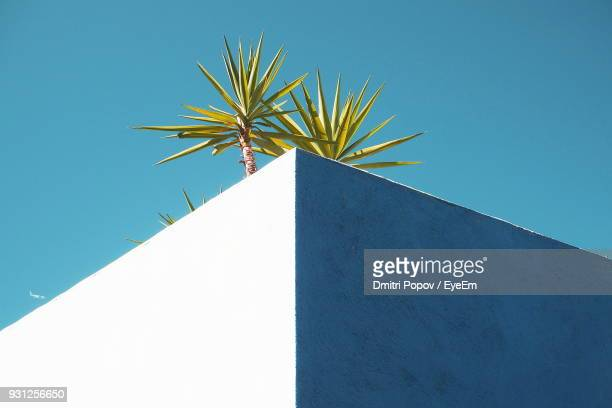 low angle view of palm tree on building against clear blue sky - corner stock pictures, royalty-free photos & images
