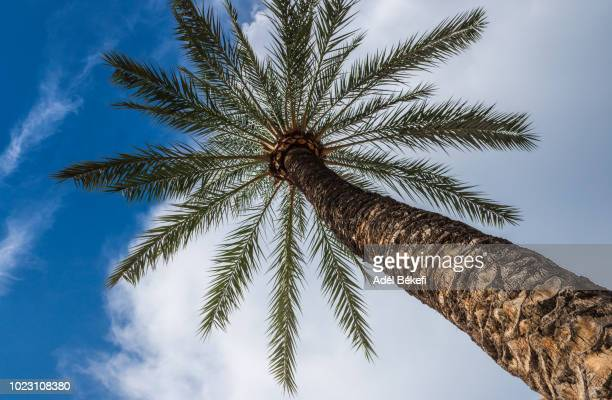 Low Angle View Of Palm Tree (Palma de Mallorca)