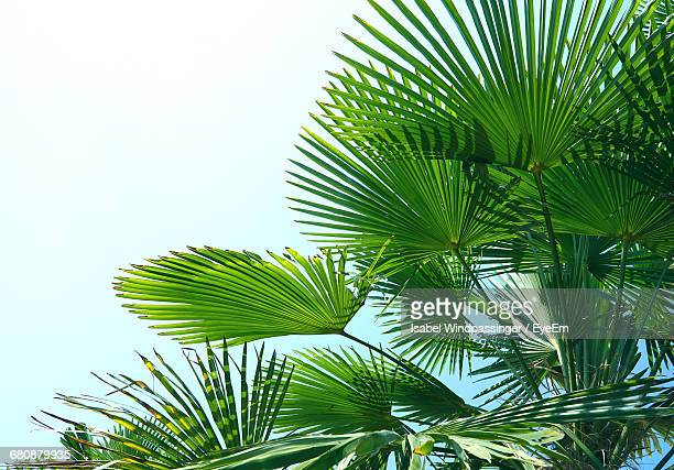 low angle view of palm tree - palm branch stock pictures, royalty-free photos & images