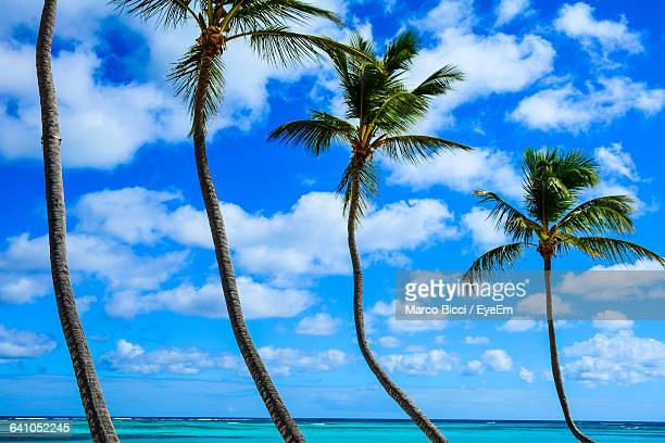 Low Angle View Of Palm Trees Against Blue Sea And Sky On Sunny Day