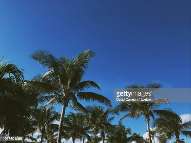 low angle view of palm trees against blue sky - ウェストパームビーチ ストックフォトと画像
