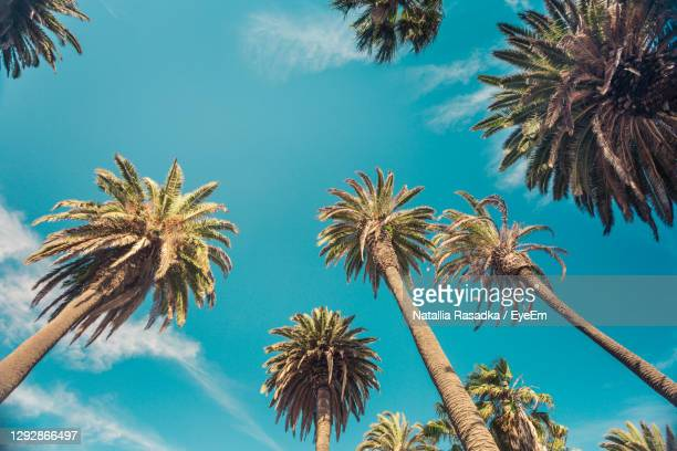 low angle view of palm trees against blue sky - beverly hills stock pictures, royalty-free photos & images