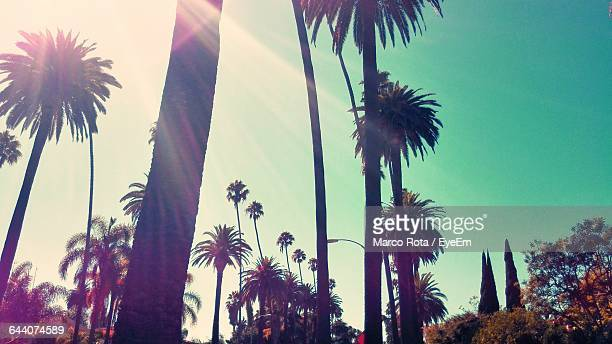 low angle view of palm trees against blue sky - beverly hills stock-fotos und bilder