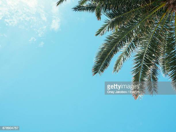 low angle view of palm trees against blue sky - alpes maritimes stock pictures, royalty-free photos & images