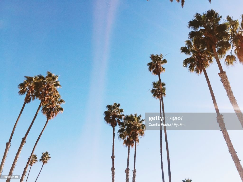 Low Angle View Of Palm Trees Against Blue Sky : Foto de stock